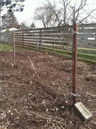 chain link fence trellis the startup homestead
