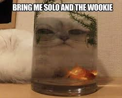Star Wars Cat Meme - lolcats star wars lol at funny cat memes funny cat pictures