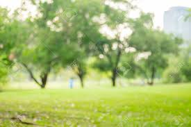 blurred background green tree in park backdrop stock