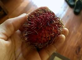 fruit similar to lychee costa rica part 4 the undulate and the imaginary u2013 bivy tales