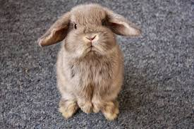 Angry Bunny Meme - 33 animals who are extremely disappointed in you