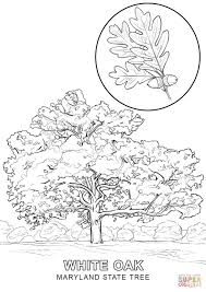 How To Draw A World Map Maryland State Tree Coloring Page Free Printable Coloring Pages