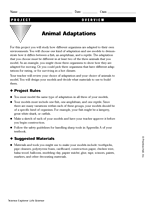 animal adaptations project worksheet 1 teachervision