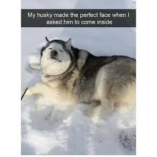 Funny Cold Meme - i guess he like cold weather funny memes daily lol pics