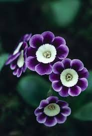 Nice Flower Picture - 3364 best flores images on pinterest nature flowers and plants