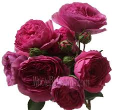roses wholesale spray garden roses wholesale garden roses fresh roses wholesale