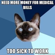Pet Insurance Meme - 3 pets who love insurance sandstone animal hospital