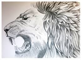 lion art lion poster animal sketch graphite drawing