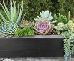 Concrete Succulent Planter Succulent Planter Box Home Design Styles