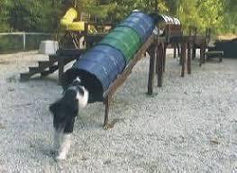Dog Backyard Playground by 28 Best Dog Agility Equipment U0026 Info Images On Pinterest Dog