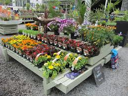 Garden Centre Ideas Potted Flower Display At Garden Centre Description From