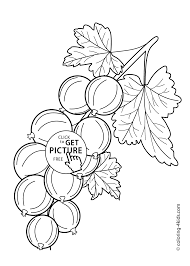 gooseberry fruits and berries coloring pages for kids printable
