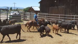 Seeking Ranch Position Wanted Experienced Ranch Management Seeking