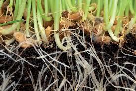 plastic pots reducing your harvest garden culture magazine