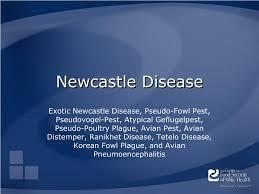 ppt newcastle disease powerpoint presentation id 179888