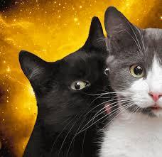 Omg Cat Meme - omg cats in space
