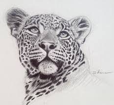 12 best alsac u0027s art images on pinterest leopards kenya and oil