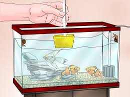 how to care for a clown fish with pictures wikihow