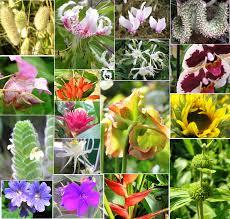 plant divisions flowering plants tentative plant scientist