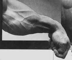 Best Forearm - grip frequency updated strength sensei