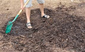 Types Of Garden Fungus - how do i get rid of mulch fungus with pictures