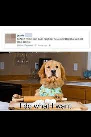 I Do What I Want Meme - i has a hotdog i do what i want funny dog pictures dog memes