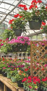 holcomb garden center heat loving plants for summer times free