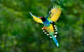 photo collection colorful birds wallpaper 7