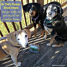 Diy Dog And Cat Treats by Lapdog Creations Dr Tim U0027s Freeze Dried Dog U0026 Cat Treats