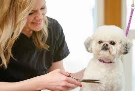 list of shih haircut basic grooming guide haircut styles for maltipoo dogs