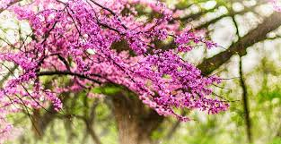 widescreen nature flowers drops park trees walk tree on