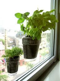 window herb garden kitchen herb garden herbow 25 best
