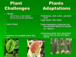 no sun plants plants plant adaptations adapting to land plants moved from water