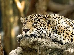 111 best beautiful animals images on pinterest animals animal