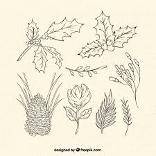 christmas plants collection of traditional christmas plants vector free