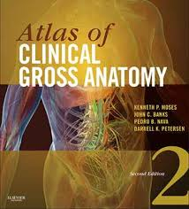 Principles Of Anatomy And Physiology Ebook Inkling Interactive Medicine Textbooks For The Web Iphone And