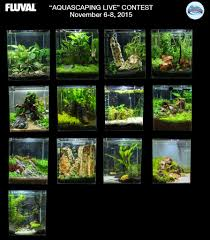 Aquascaping Competition Aquascaping Live Contest Results Aquatic Experience