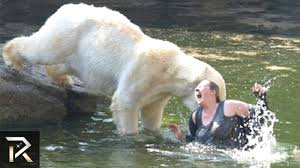 10 unbelievable animal attack stories youtube