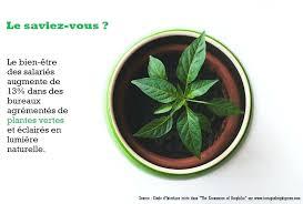plante verte bureau plante verte bureau infographie plante de bureau plante depolluante