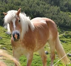 Horse Design Home Decor Iama Horse Dentist Ama Have An Upvote Arafen
