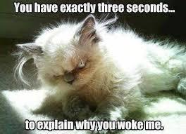 Why Me Meme - animal memes why did you wake me funny memes