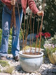 create a tower of climbing annuals hgtv