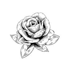 design flower rose drawing rose drawing flower nature vector icon on white background stock