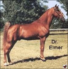 tennessee walking horse doc u0027s tribute 830911