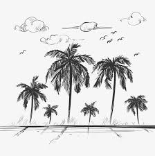 sketch coconut tree download png and vector for free download