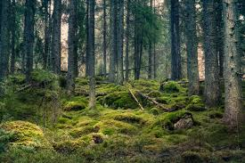 forest images Royalty free forest pictures images and stock photos istock