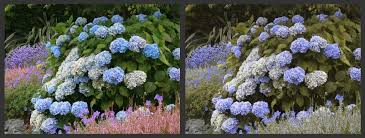 Human Color Blindness Designing A Landscape For Color Blind People North Coast Gardening