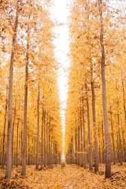 thanksgiving farm autumn heaven aka the boardman tree farm u2014 happy anything