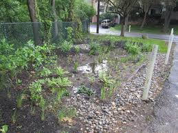native plants for rain gardens stormwater
