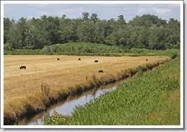 North Carolina wildlife tours images Wildlife viewing tour take a driving tour of eastern nc wildlife jpg
